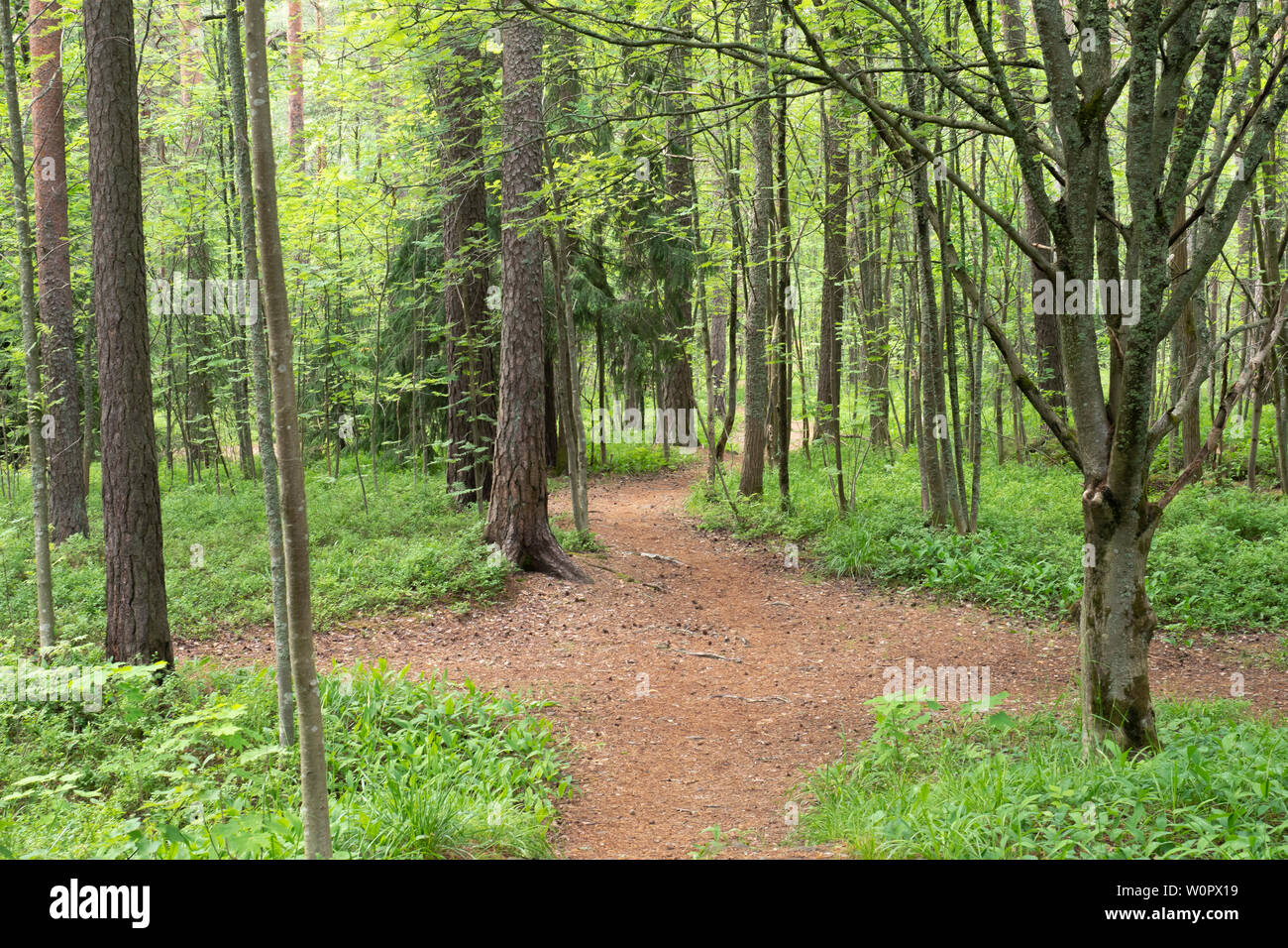 Jogging Paths in a Forest in Pispala Tampere Finland - Stock Image