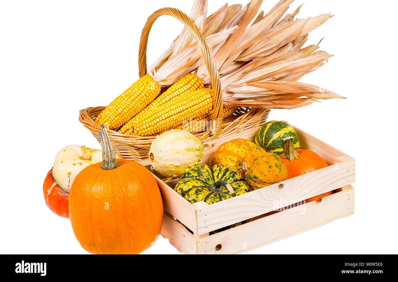 A wooden box with many colourful pumpkins and a basket with corncobs isolated on a white background - Stock Image