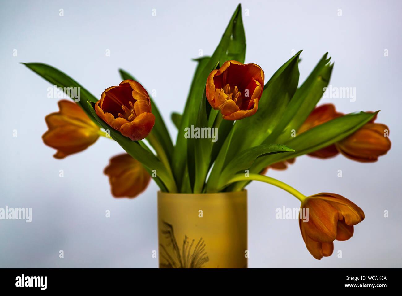 Ein Strauß Tulpen in der Vase.   A bouquet of tulips in the vase. - Stock Image