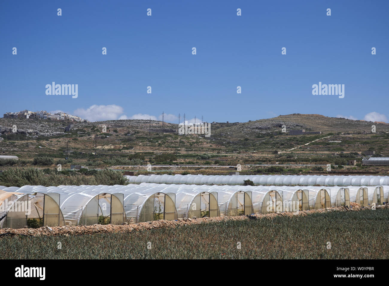 Array of plastic tunnel greenhouses with field of young vegetables in front against a blue sky. Stock Photo
