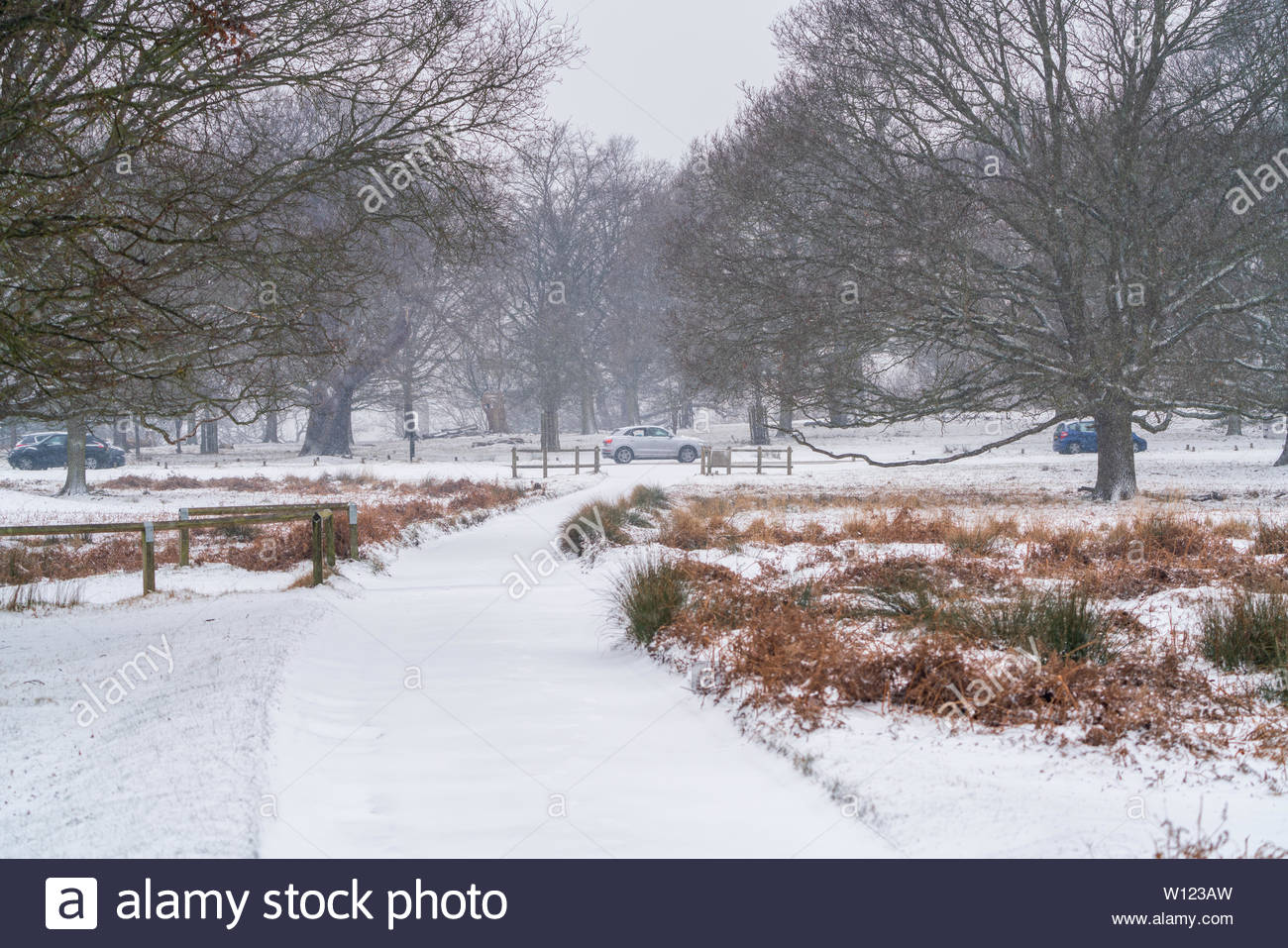 Ice and snow in Richmond parl, England, during a storm names