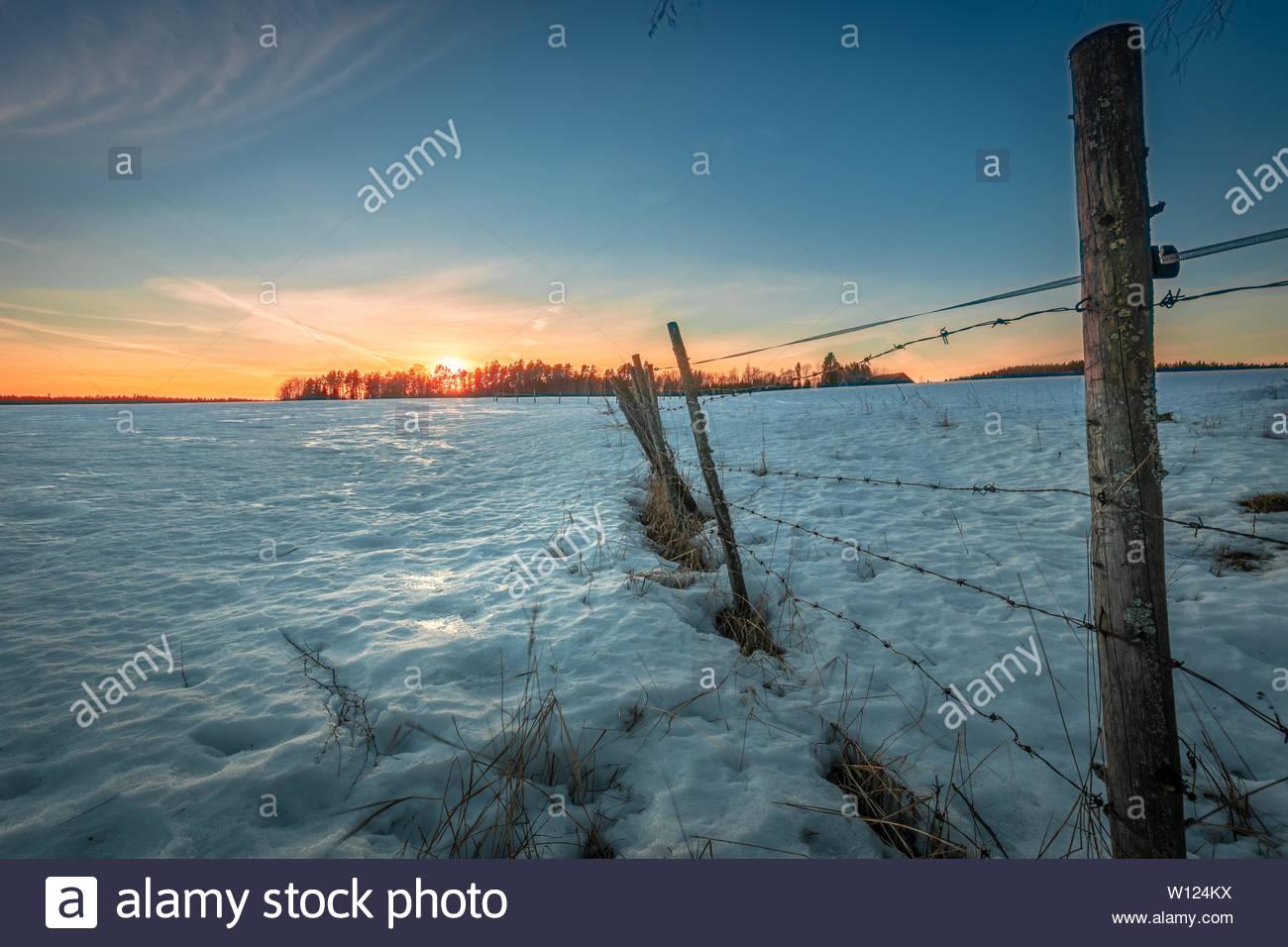 Barb wire, winter landscape - Stock Image