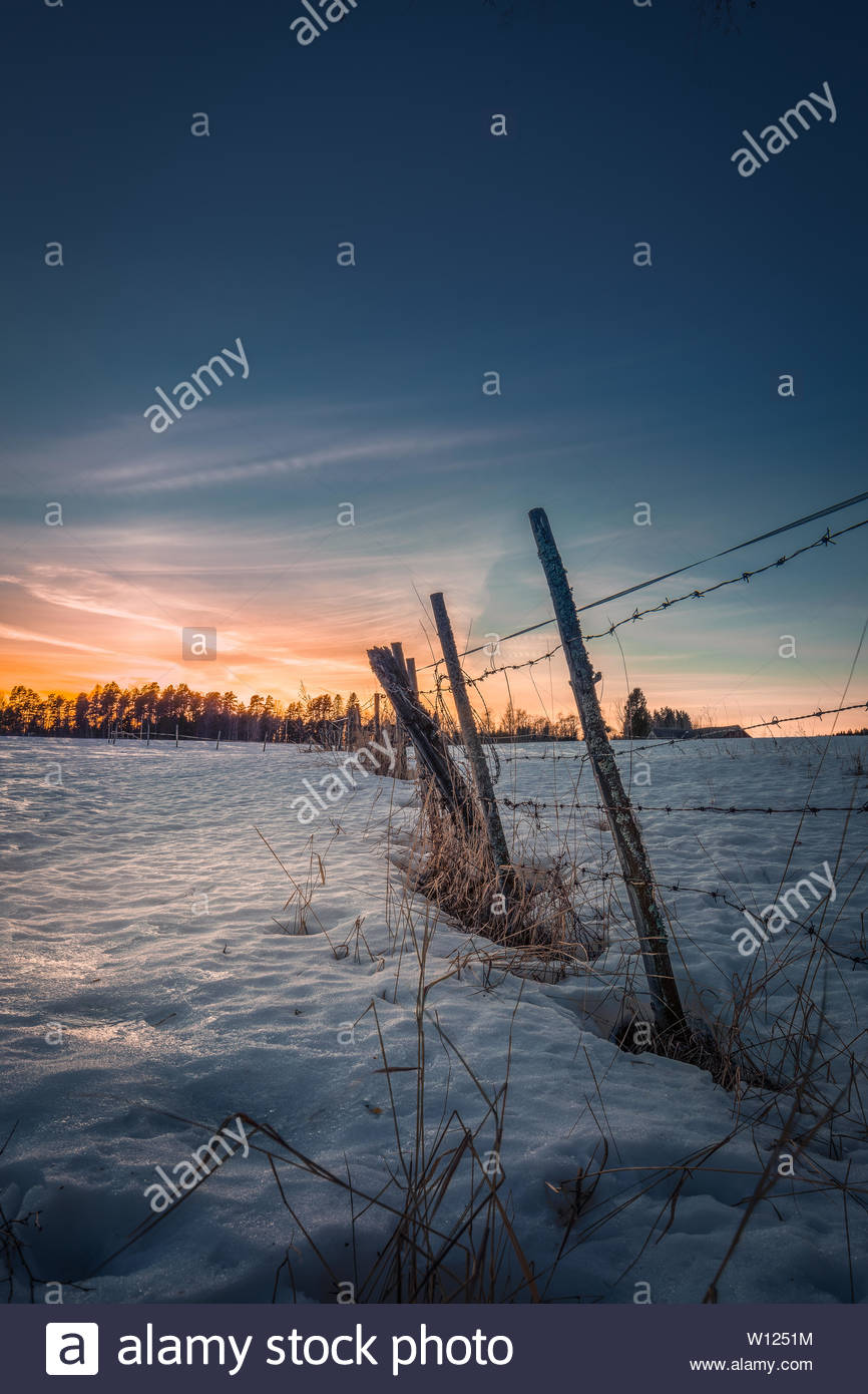 Barb wire, winter landscape - Stock Image
