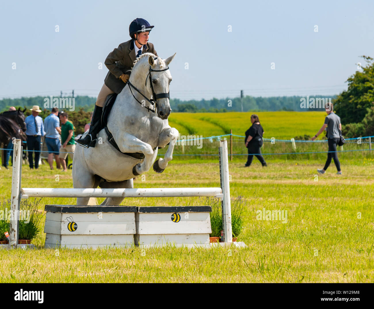 East Fortune, East Lothian, Scotland, United Kingdom. 29th June, 2019. Haddington Show: Haddington Show has taken place annually since 1804, held by the United East Lothian Agricultural Society. Traditional events include horse show jumping. A horse jumping over a fence - Stock Image