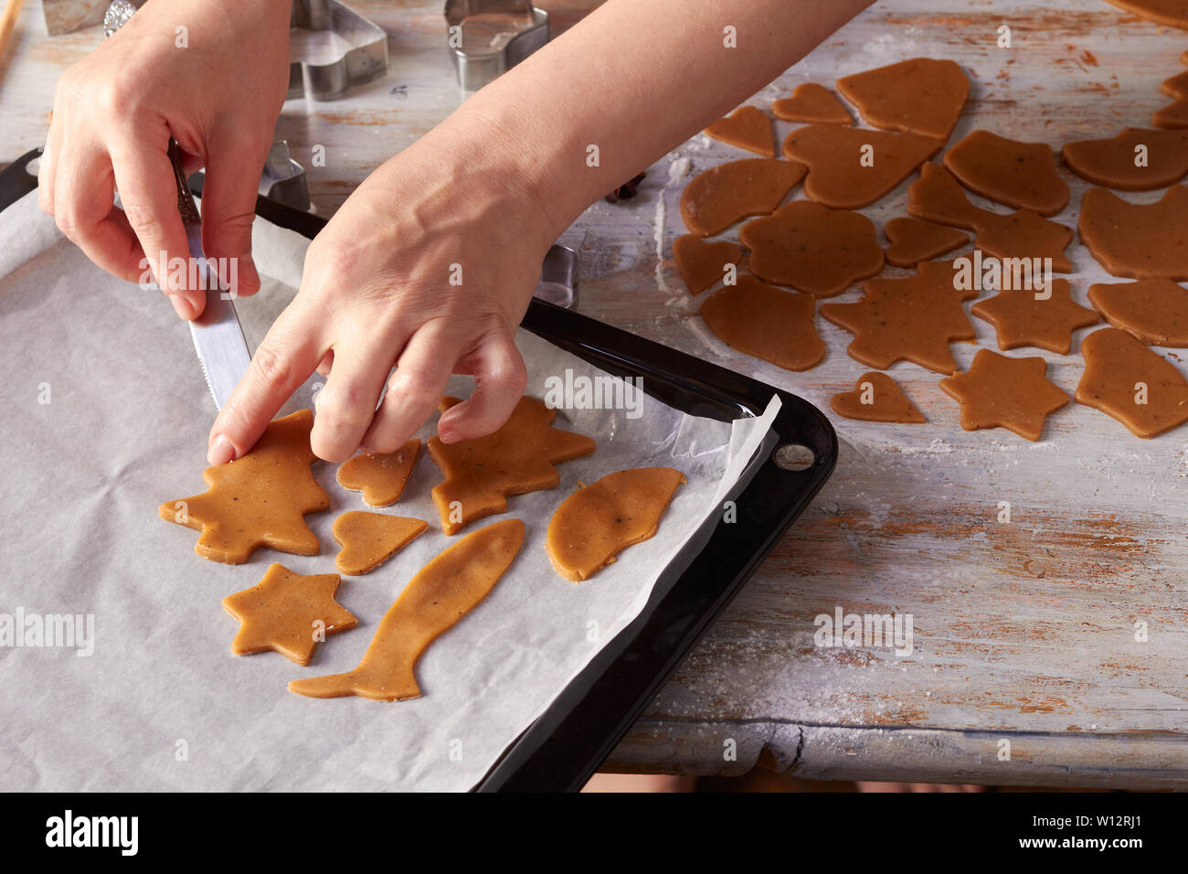 Woman's hands place raw ginger cookies on baking tray - Stock Image
