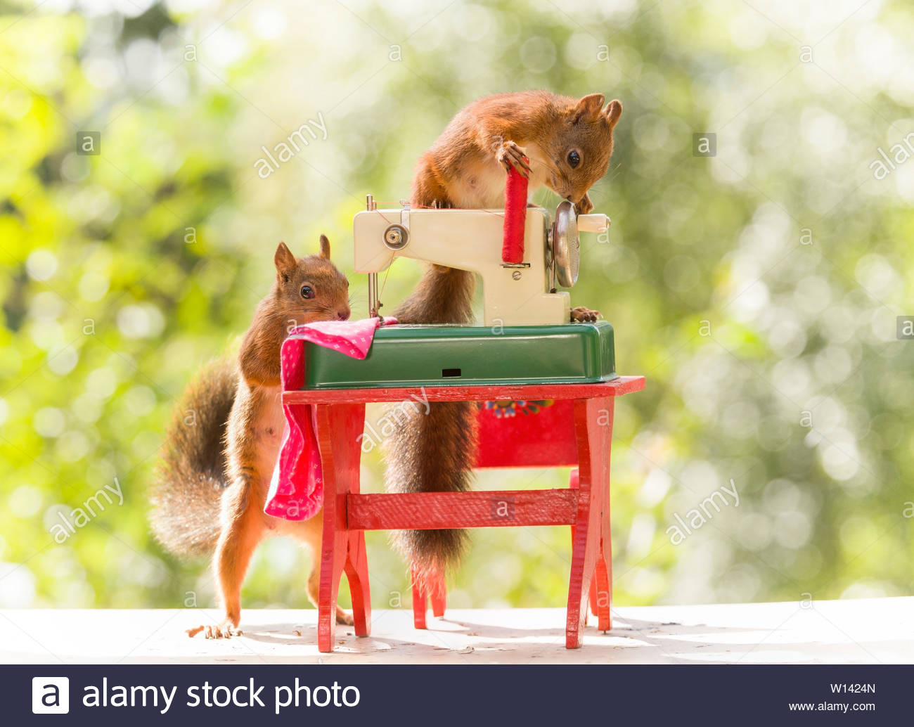 red squirresl are sewing at a table - Stock Image