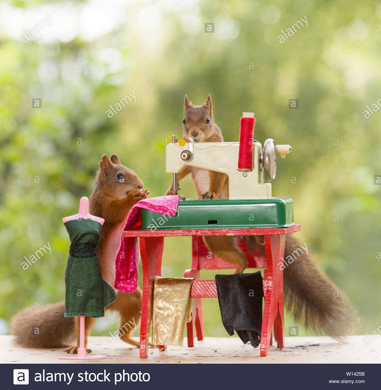 red squirrels sewing cloths - Stock Image