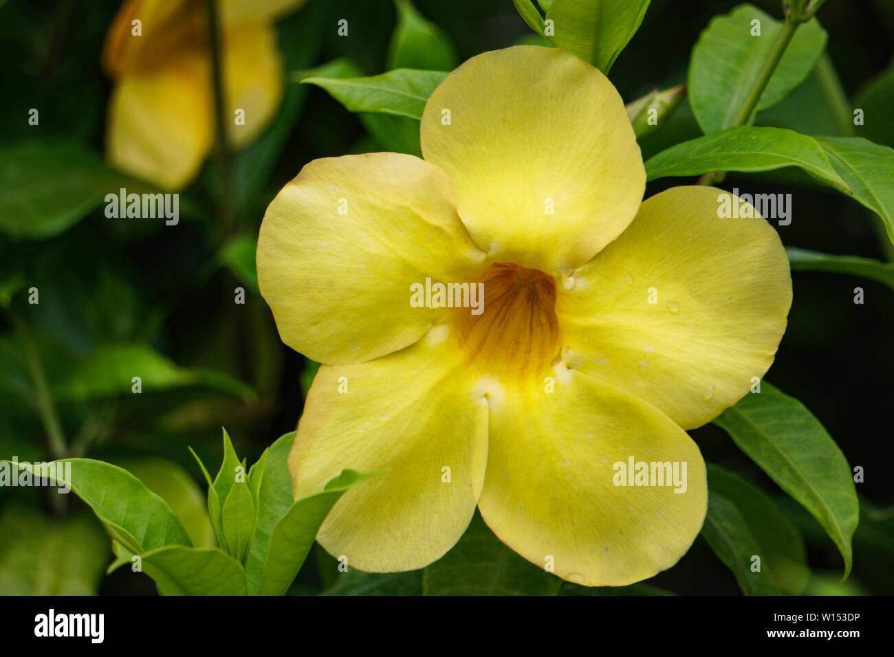 Flower Hd High Resolution Stock Photography And Images Alamy