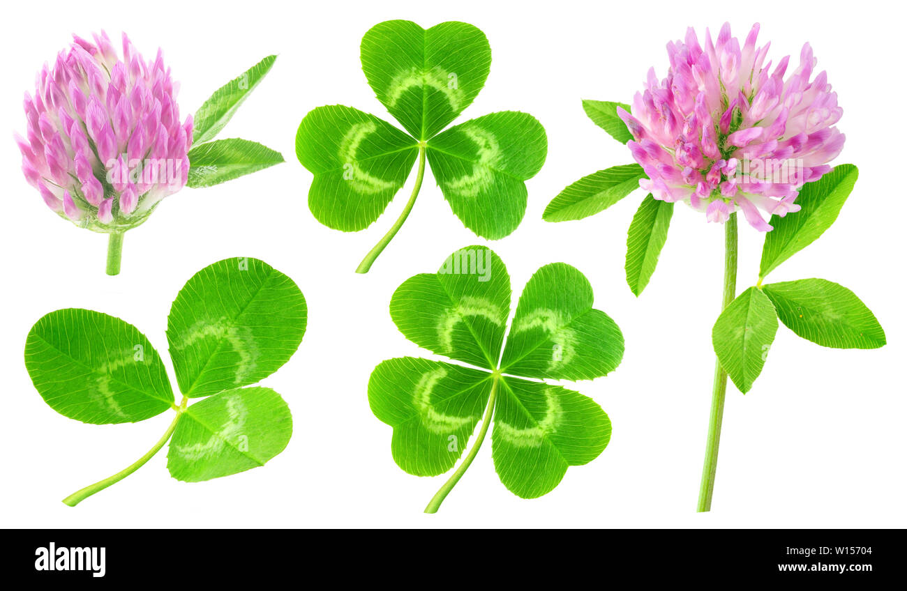 Isolated clovers. Collection of clover leaves and flowers isolated on white background with clipping path Stock Photo