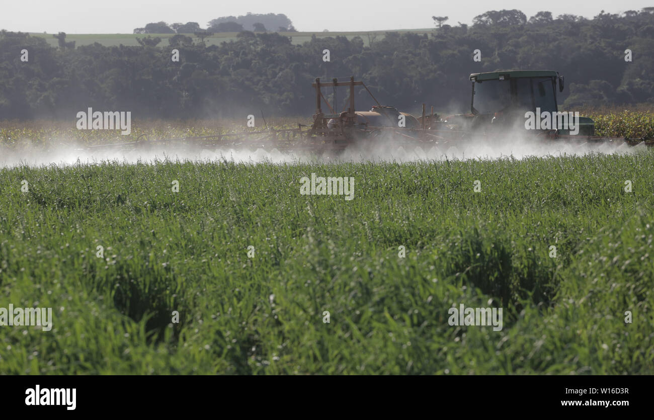 CAMPO MOURÃO, PR - 30.06.2019: APLICAÇÃO DE VENENO EM PLANTAÇÃO DE AVEIA - Farmers of Campo Mourão, in the Center-West Region of Paraná, are applying fungicides in oat plantations to avoid losses with rust. The disease attacks crops and causes productivity to plummet. In the photo, the rural farmer protects the oats by applying fungicide. (Photo: Dirceu Portugal/Fotoarena) - Stock Image