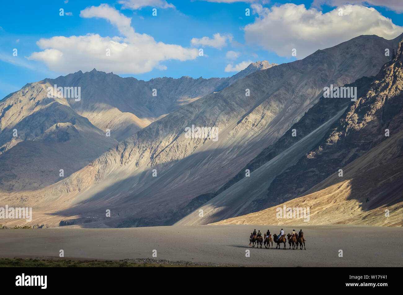 Camel ride in the cold desert of Ladakh. Ladakh landscape with desert mountains and blue sky - Stock Image
