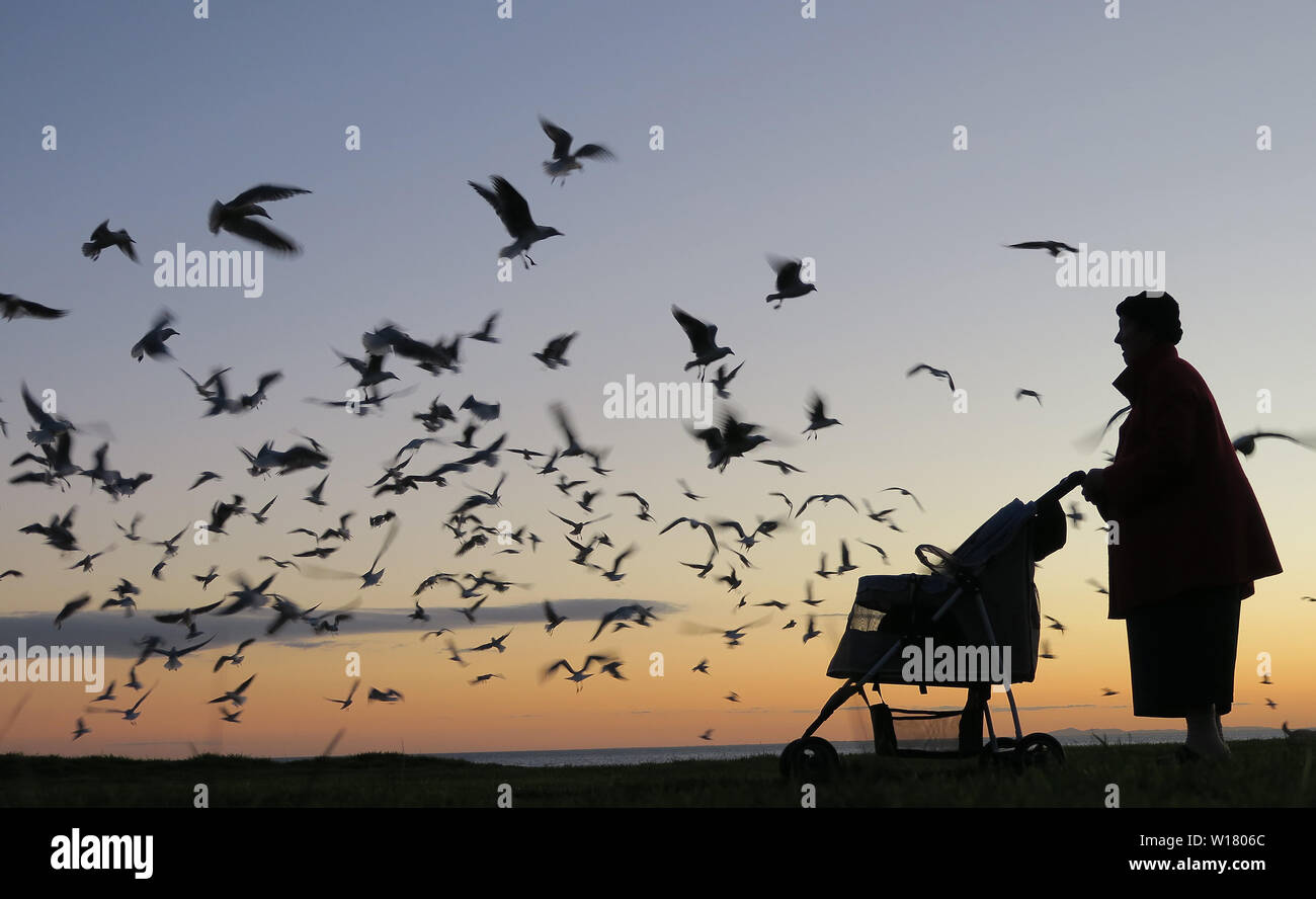 Birds of Melbourne. Silhouette of an old lady feeding seagulls at dusk on the beach in Melbourne. - Stock Image