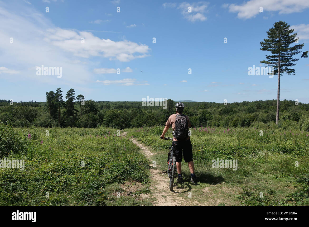Abbots wood,UK. 1st July 2019. UK weather.A cyclist enjoys the view from Abbots wood near Hailsham in today's summer sun.Abbots wood, East Sussex,UK. Credit:Ed Brown/Alamy Live News - Stock Image