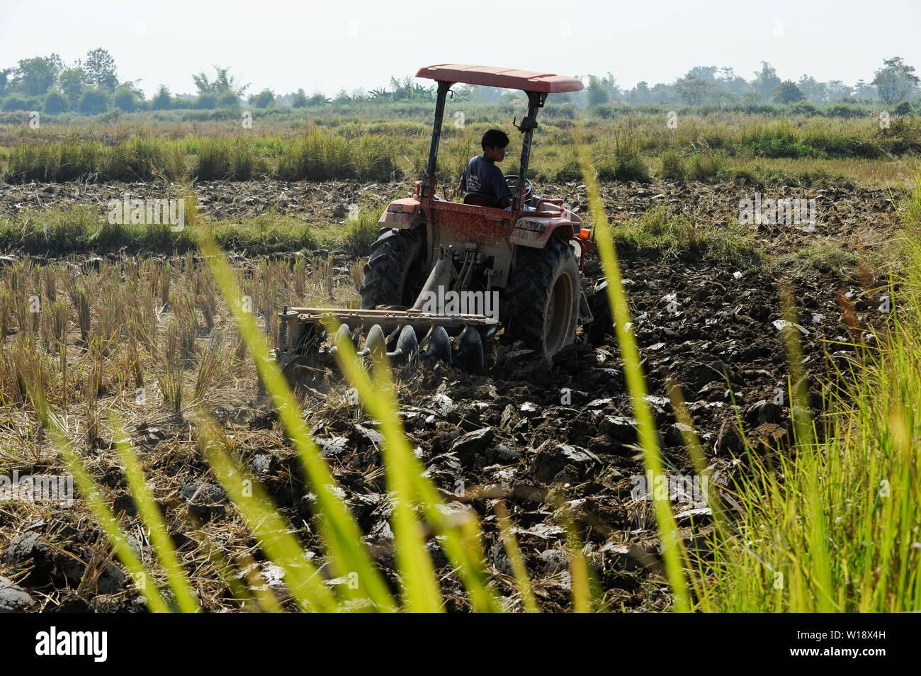 LAOS, rice research NAFRI, experimental farm, ploughing of paddy field where rice seeds will be produced / LAOS Vientiane NAFRI Forschungsinstitut fuer Land- u. Forstwirtschaft, Reis Versuchsfelder und Anbau von Hybrid Reis zur Gewinnung von Saatgut, Pfluegen eines Feldes mit Traktor - Stock Image