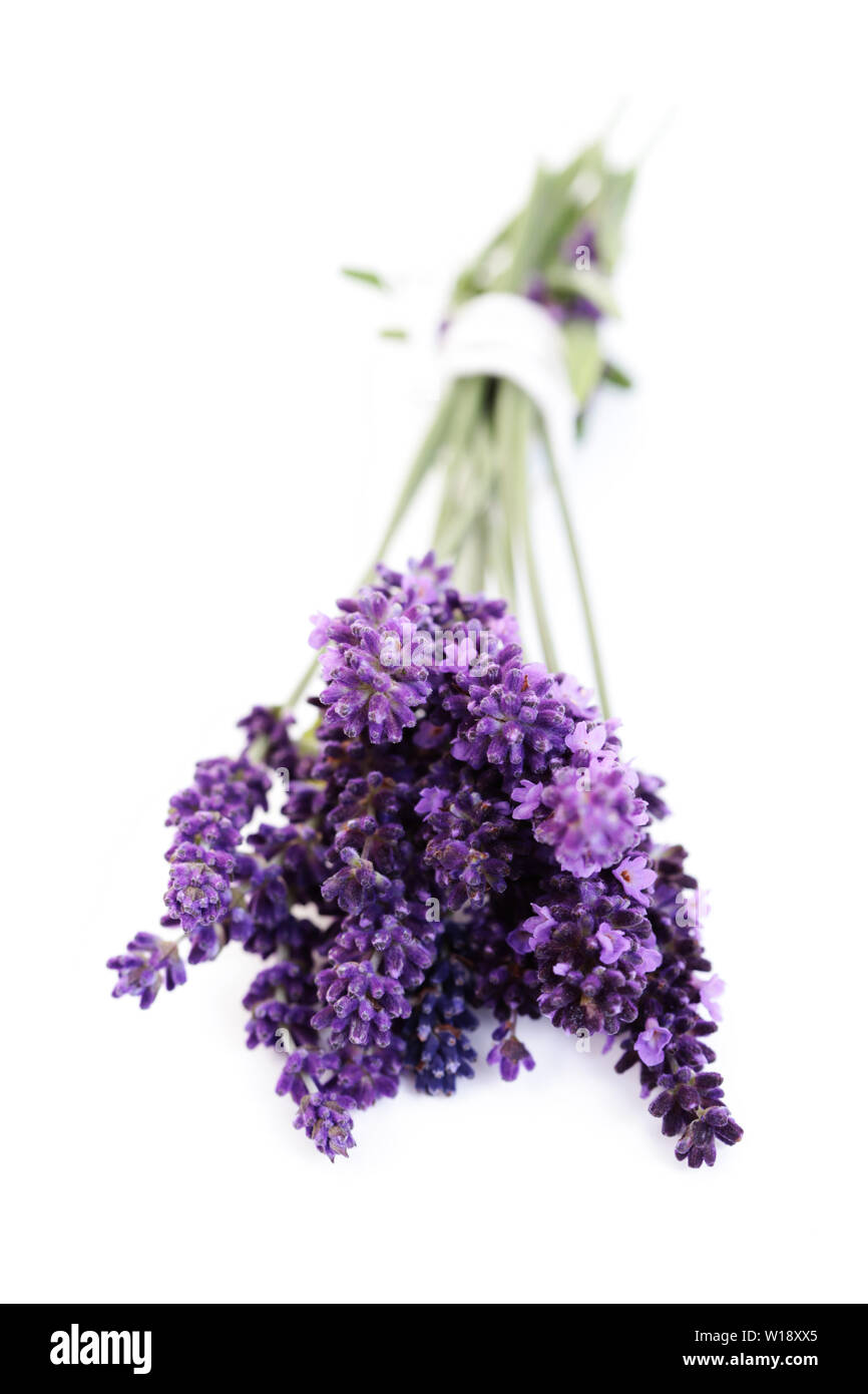 lavender,bouquet - Stock Image
