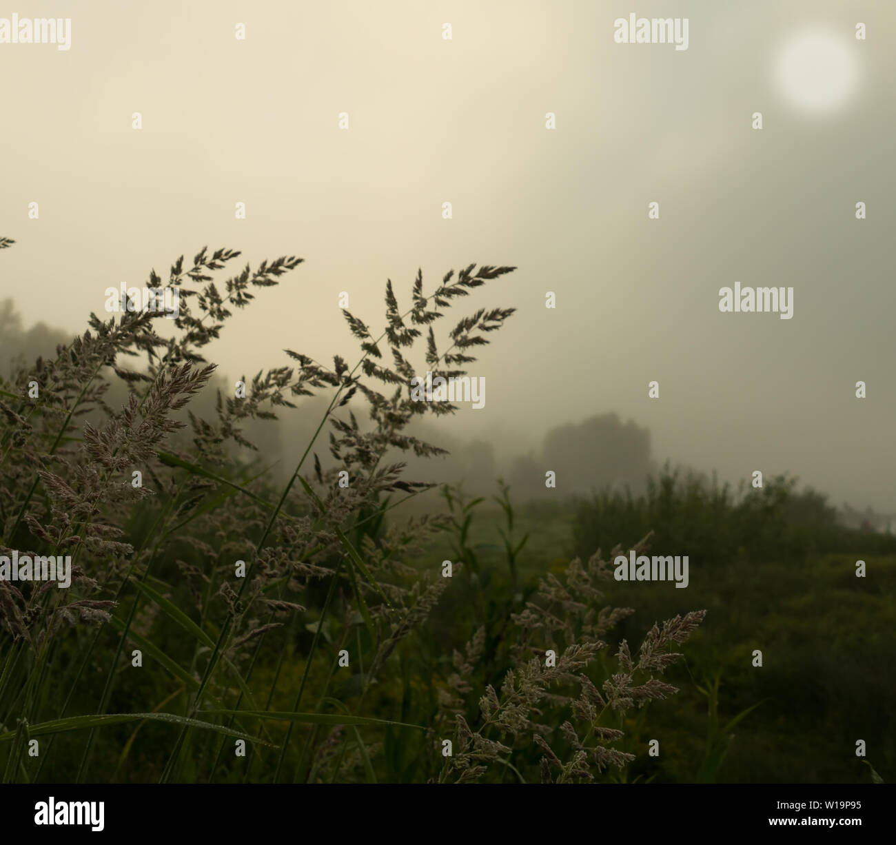 grass on a foggy morning - Stock Image