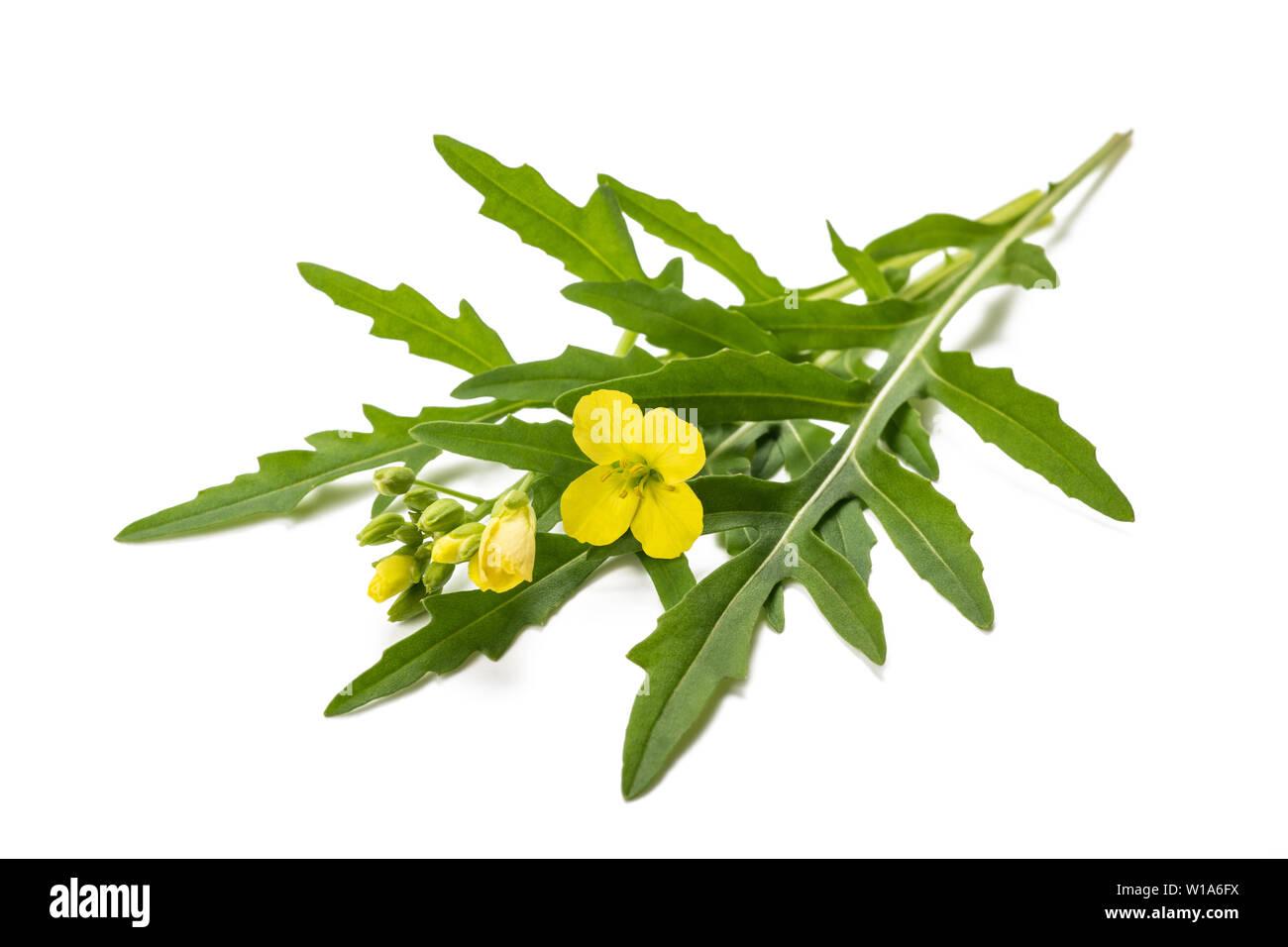 Fresh arugula with flower isolated on white Stock Photo