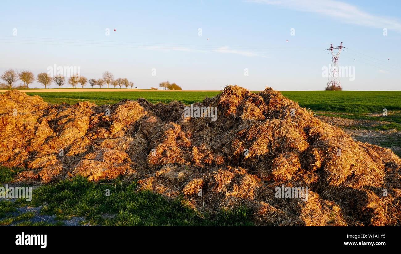 Manure pile, Champagne plain, France Stock Photo