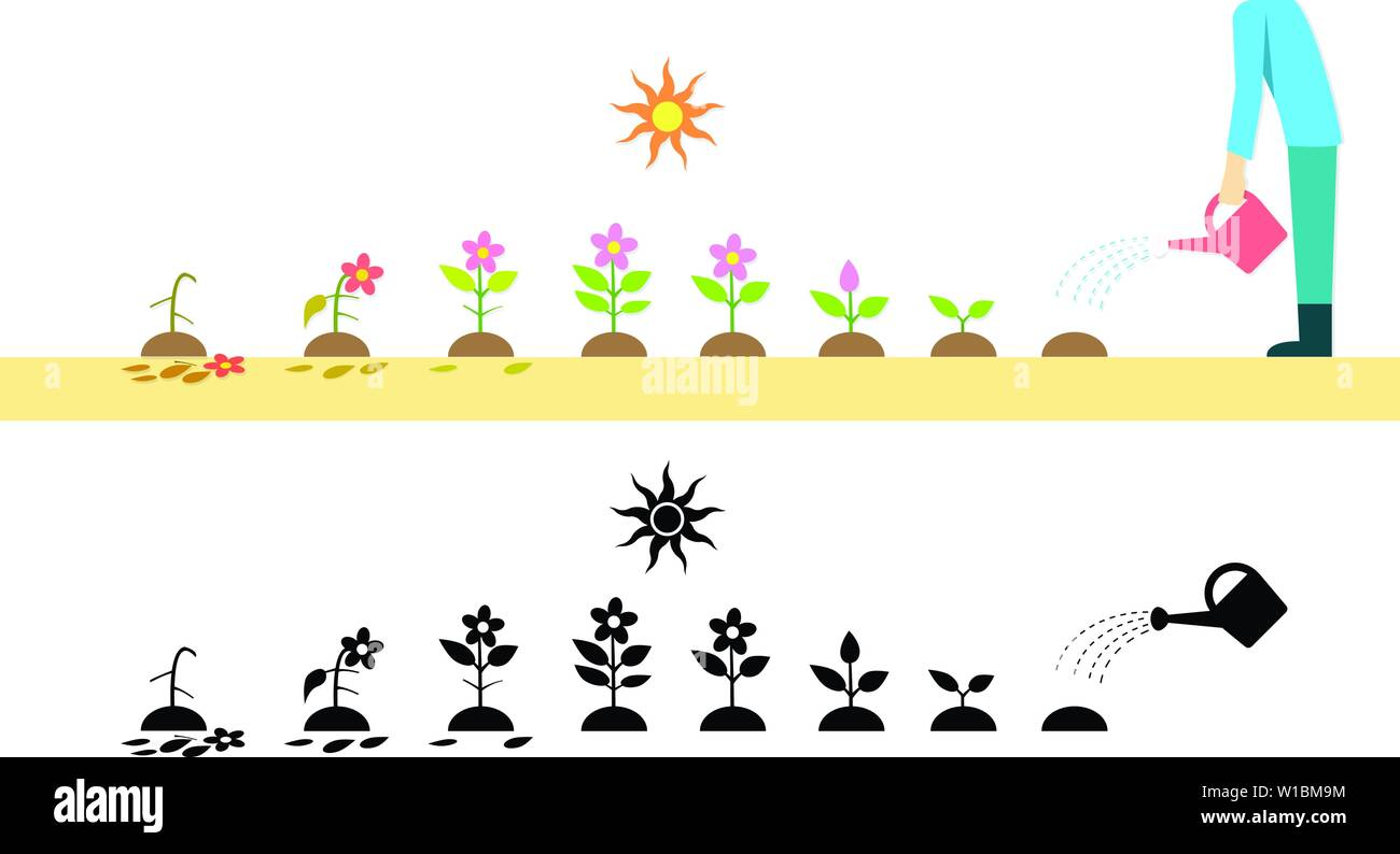 Time lapse flower plant growing in vector art design - Stock Vector