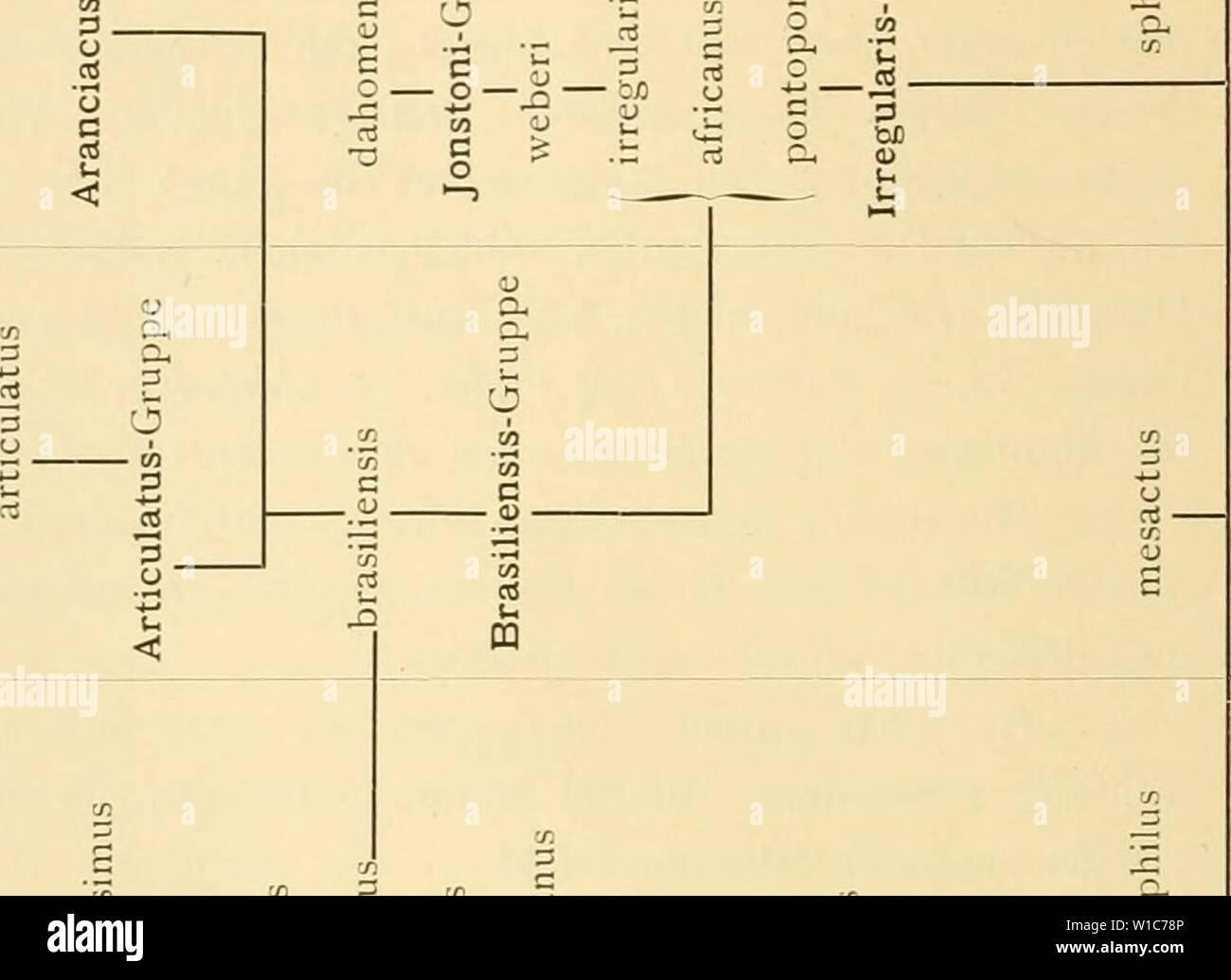 Archive image from page 55 of Die Asteriden der Siboga-Expedition (1917). Die Asteriden der Siboga-Expedition . dieasteridenders4619171936dd Year: 1917  z a u    byj 3 e n) u c/: .o ä. o CS u c <u X n Q< 1) c  9- O D. Dh (/; Cu C  Q- 3 3 O t) -â (U u 'Â« u, ,cn rt o o J r-'  ._ <U u -t-< â 4-» CS c8 'T J C p  O 09 3 CS C ''Sj- es cS 3 tfl VI (/l 3 u X .-d o u O 3 _ .5 u 'n Oh 3 S U o - â p 1-  a    u nJ V. Q-i <u p, C  o ⢠4 , CO X o â  W sxi - â 3 U rt â J-» > CS CS n lU C .3 CD > CS (U t/1 (L) J3 O o CS bx) CS o E 3 c CS CJ CS 3 o 1. c 'S) g 6 ex 3 O O-, 3 (1) TS O e - Stock Image