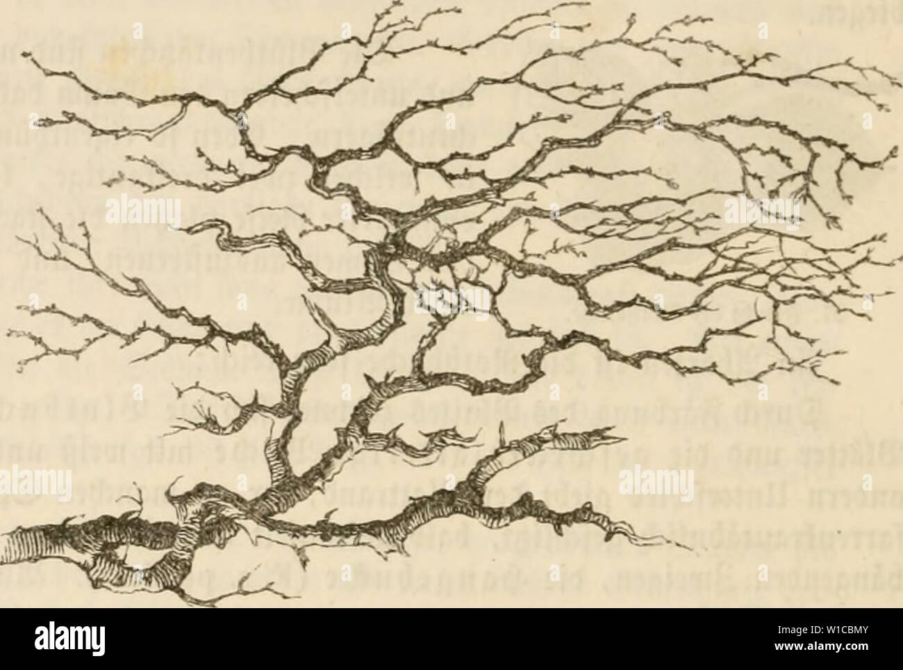 1857 59 Stock Photos & 1857 59 Stock Images - Alamy Phyiso Nt Map Of India Images on