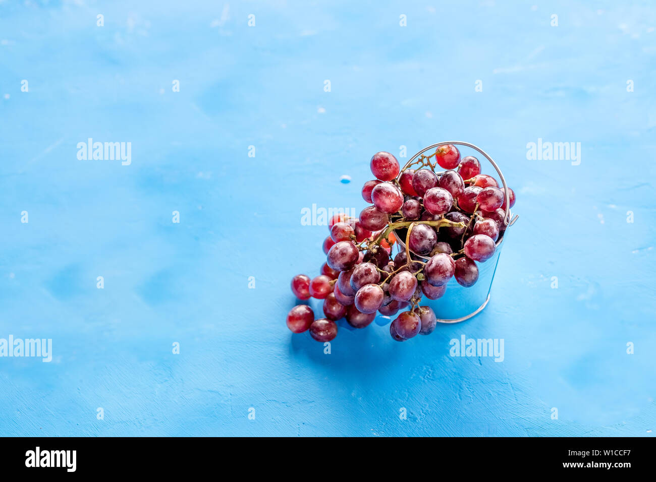 Red grape with water drops, closeup, isolated on blue background.fresh red grapes. Harvest time. Summer fresh berries, healthy food,wine production Stock Photo