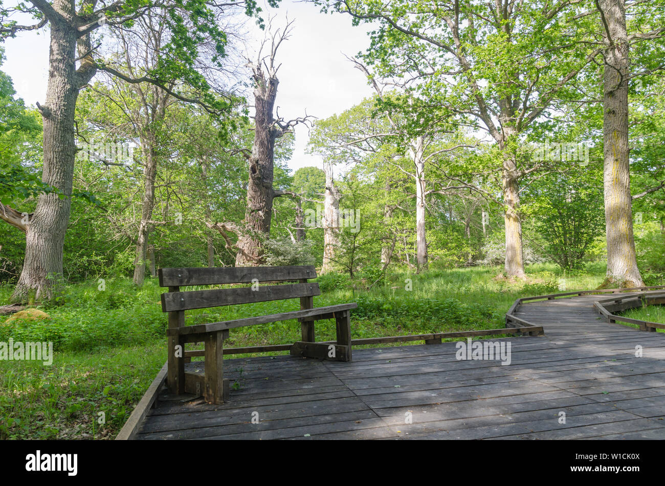 Bench by a wooden footpath in the nature reserve Halltorps Hage with old oak trees on the swedish island Oland Stock Photo