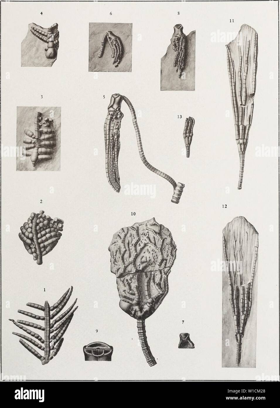 Archive image from page 682 of The Devonian crinoids of the Stock Photo