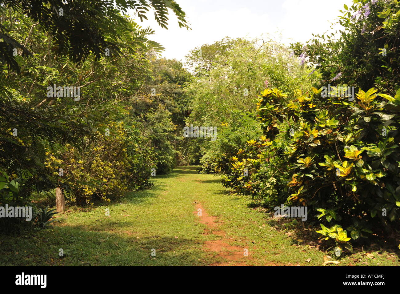 Accra 2nd July 2019 Photo Taken On June 28 2019 Shows The Scenery Of Legon Botanical Garden In Accra Capital Of Ghana The Garden Featuring Tropical Plants And Wild Animals Lies In
