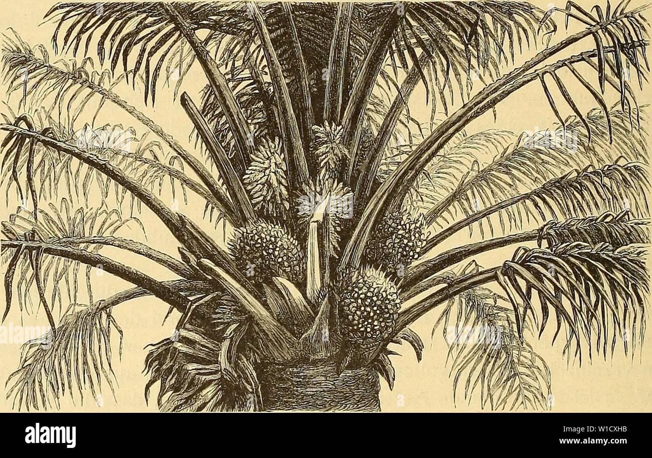 Archive image from page 79 of Die Loango-Expedition ausgesandt von der Stock Photo