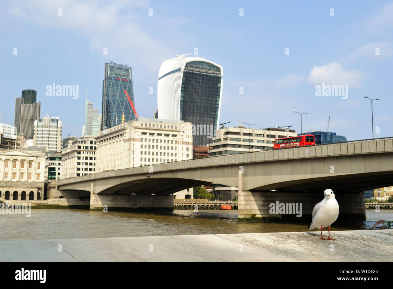 London/UK - September 7, 2014: White seagull standing on riverbank with the City of London, Thames river  and the London bridge in background. Stock Photo