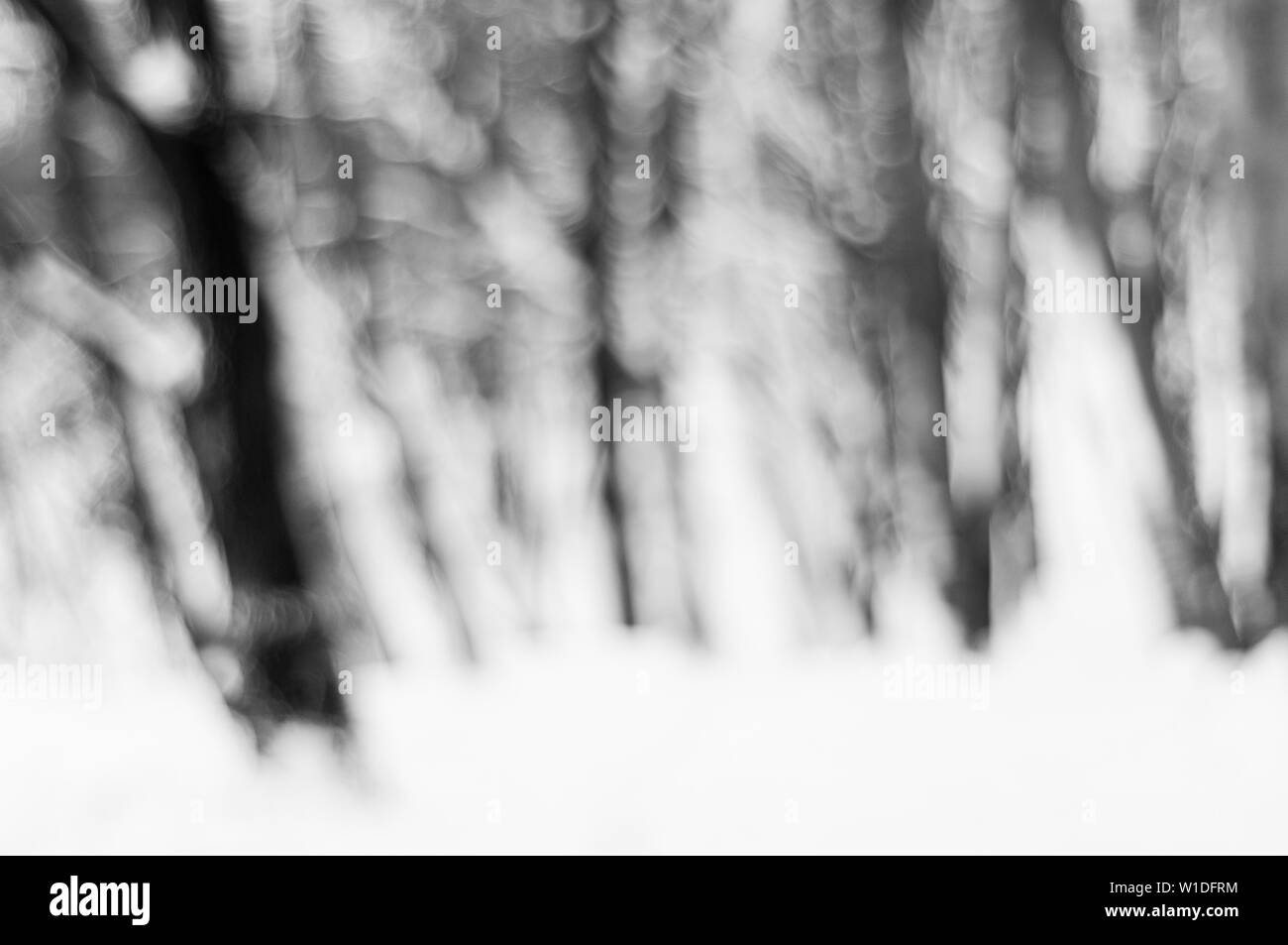 Blurred background of winter forest - Stock Image