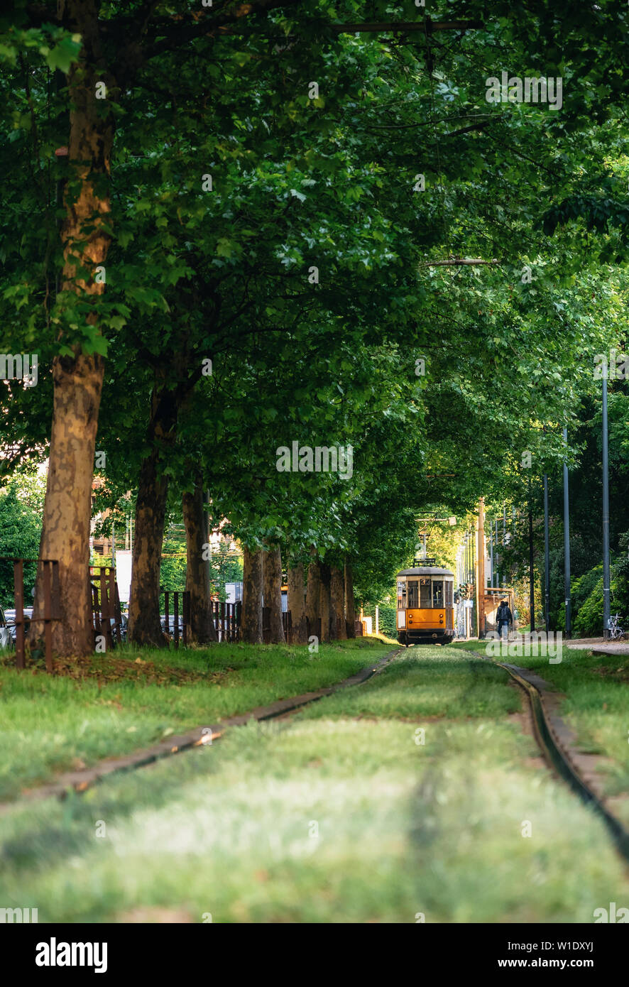 Old red city tram goes through green tunnel in dense forest in Milan, Italy Stock Photo