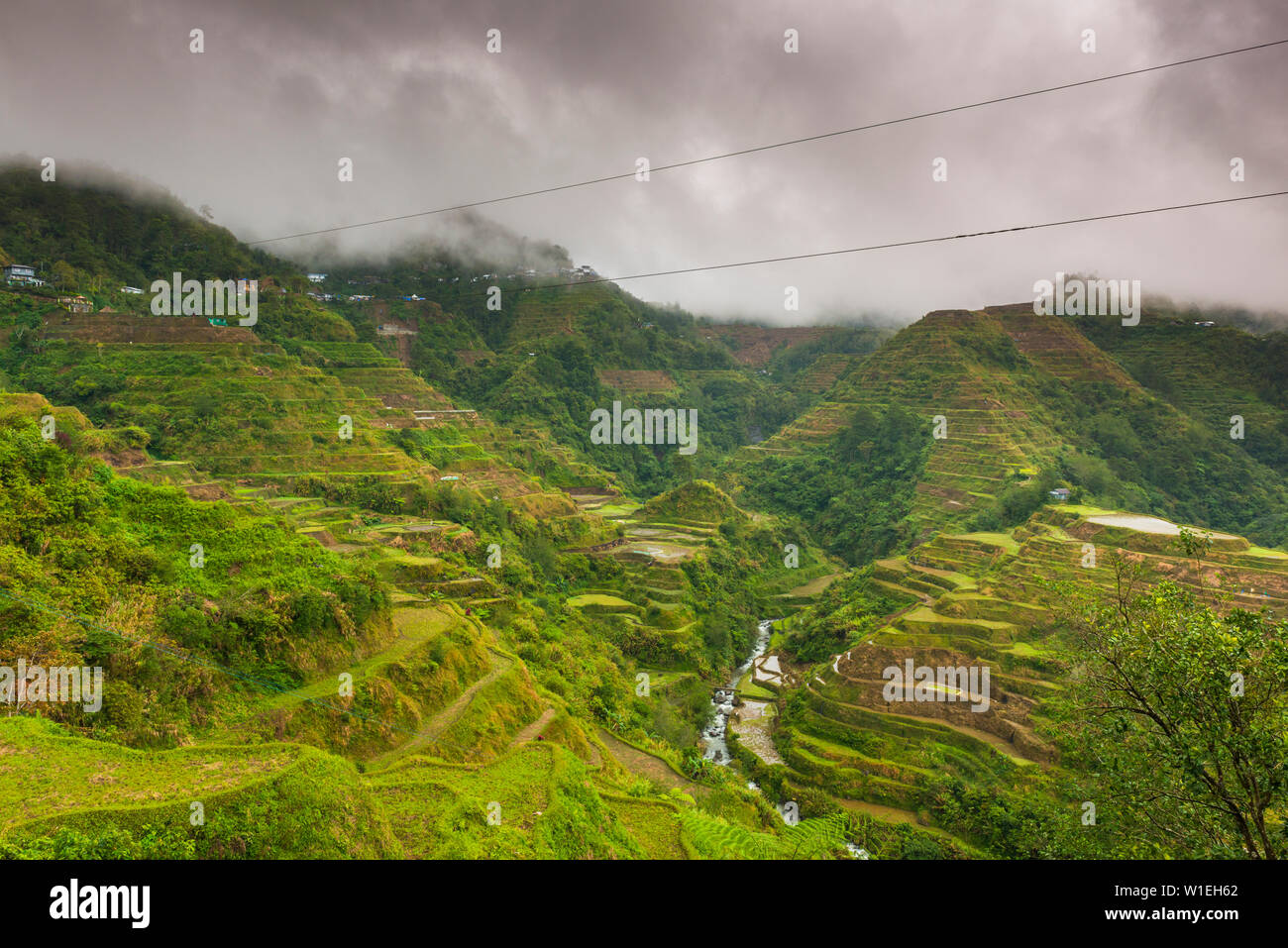 Rice Terraces, Banaue, UNESCO World Heritage Site, Luzon, Philippines, Southeast Asia, Asia - Stock Image