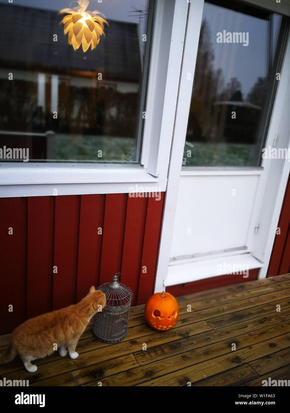 Halloween Dekoration High Resolution Stock Photography And Images Alamy