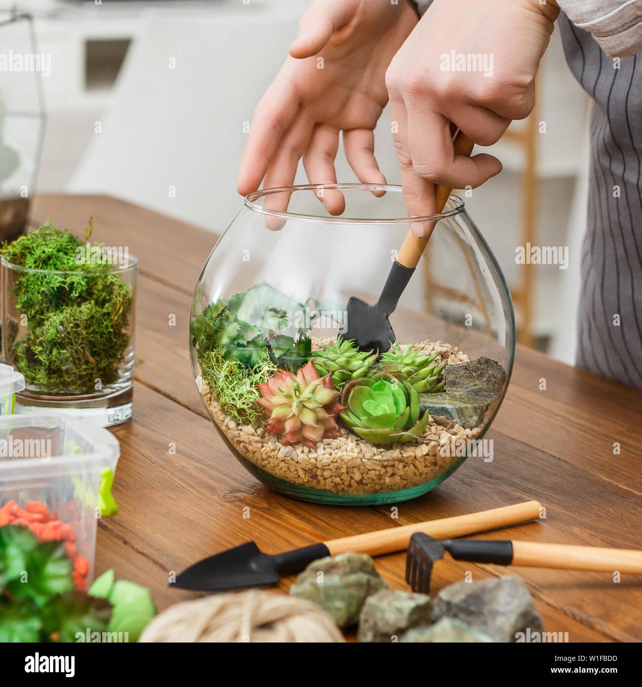 Woman transplanting plants in florarium. Mini gardening hobby concept Stock Photo