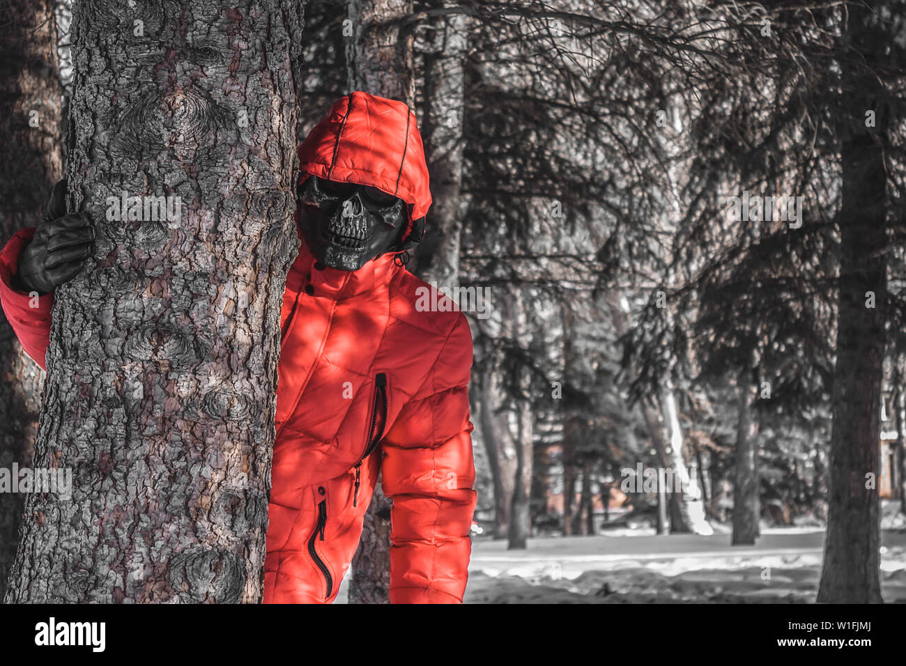 Great danger in the forests, killer on the hunt - Stock Image