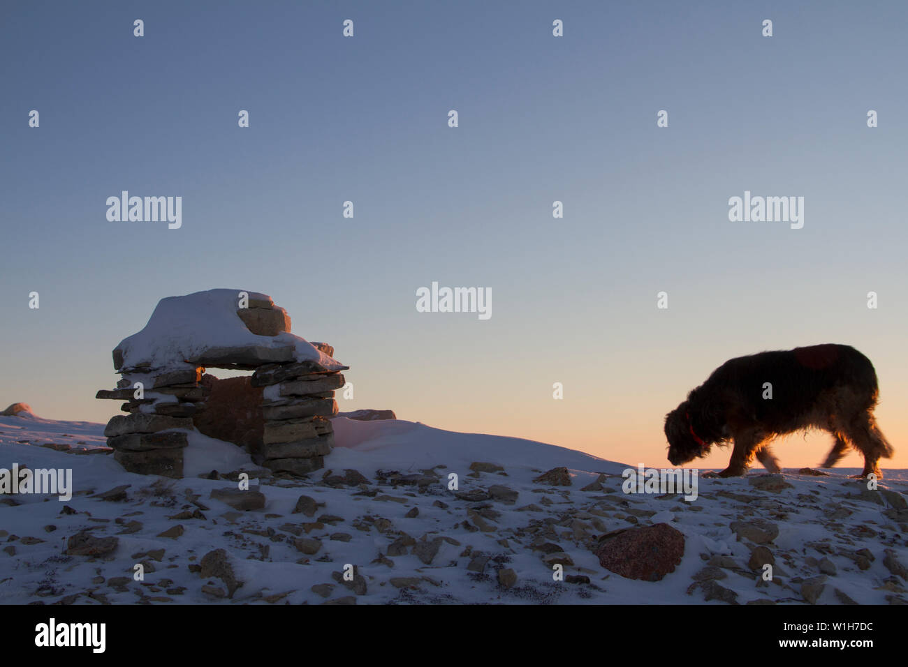 Inuksuk (or spelled Inukshuk) Inuit landmark covered in snow at sunrise found on a hill near the community of Cambridge Bay, Nunavut, Canada with a do - Stock Image