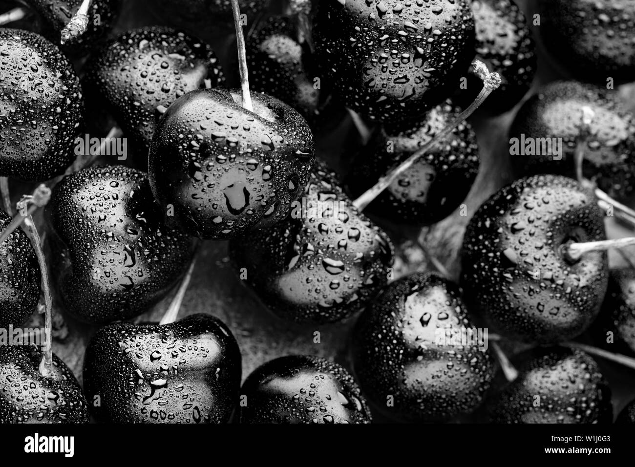 close-up of bright black ripe cherries. unusual blue background. Large collection of fresh black cherries. - Stock Image