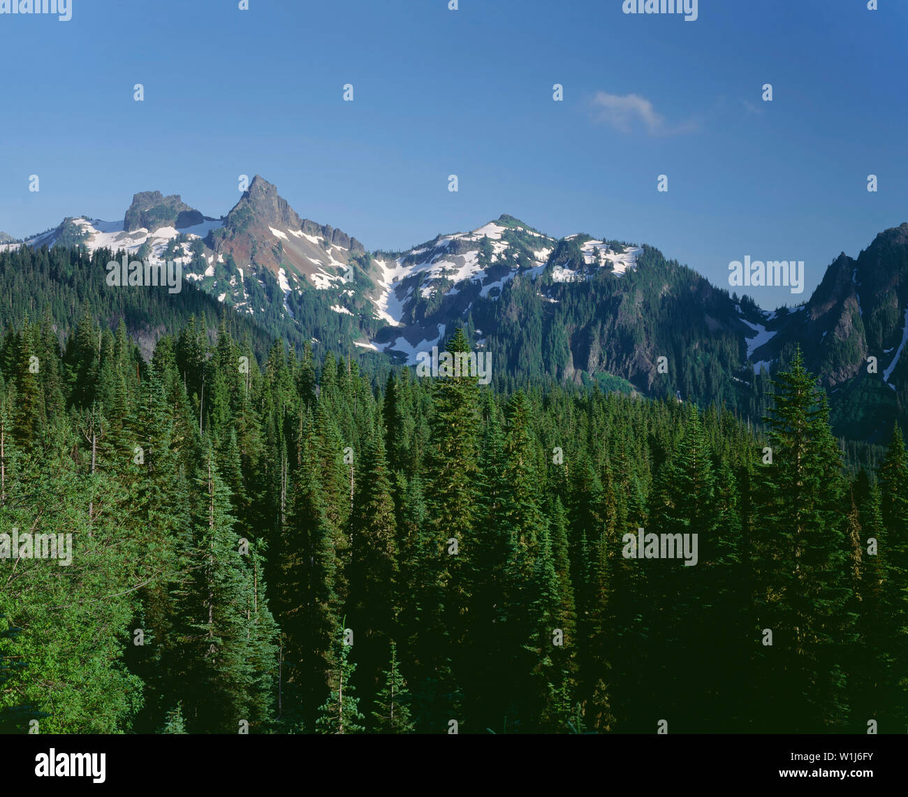 USA, Washington, Mt. Rainier National Park, Coniferous forest in early summer with previous winter's snowpack lingering on the peaks of Tatoosh Range. - Stock Image