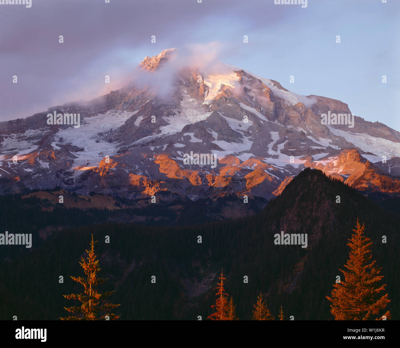 USA, Washington, Mt. Rainier National Park, Sunset light reddens southern slopes of Mount Rainier and conifer trees. - Stock Image