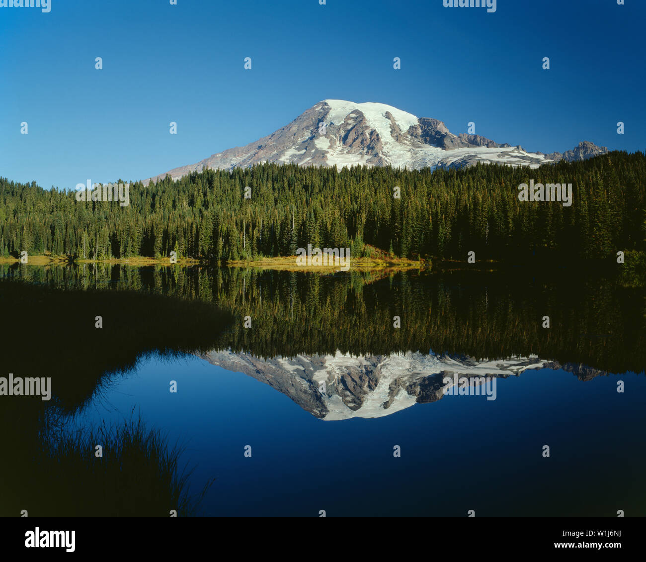 USA, Washington, Mt. Rainier National Park, Mount Rainier and fall colored shrubs and grass are mirrored in Reflection Lake. - Stock Image