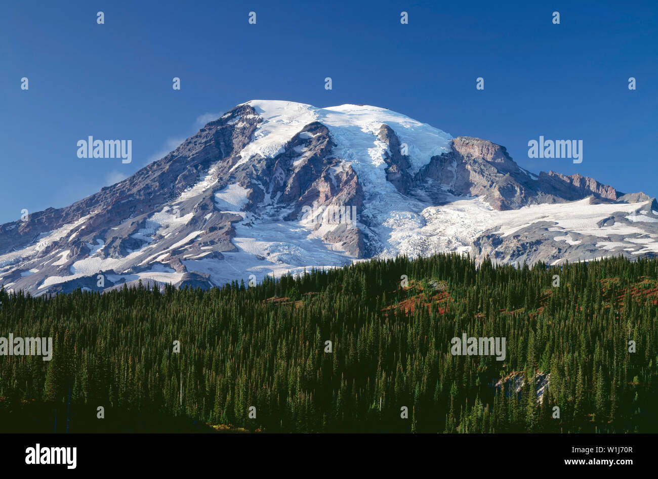USA, Washington, Mt. Rainier National Park, South side of Mt. Rainier rises about 10,000 ft. above evergreen forest. - Stock Image