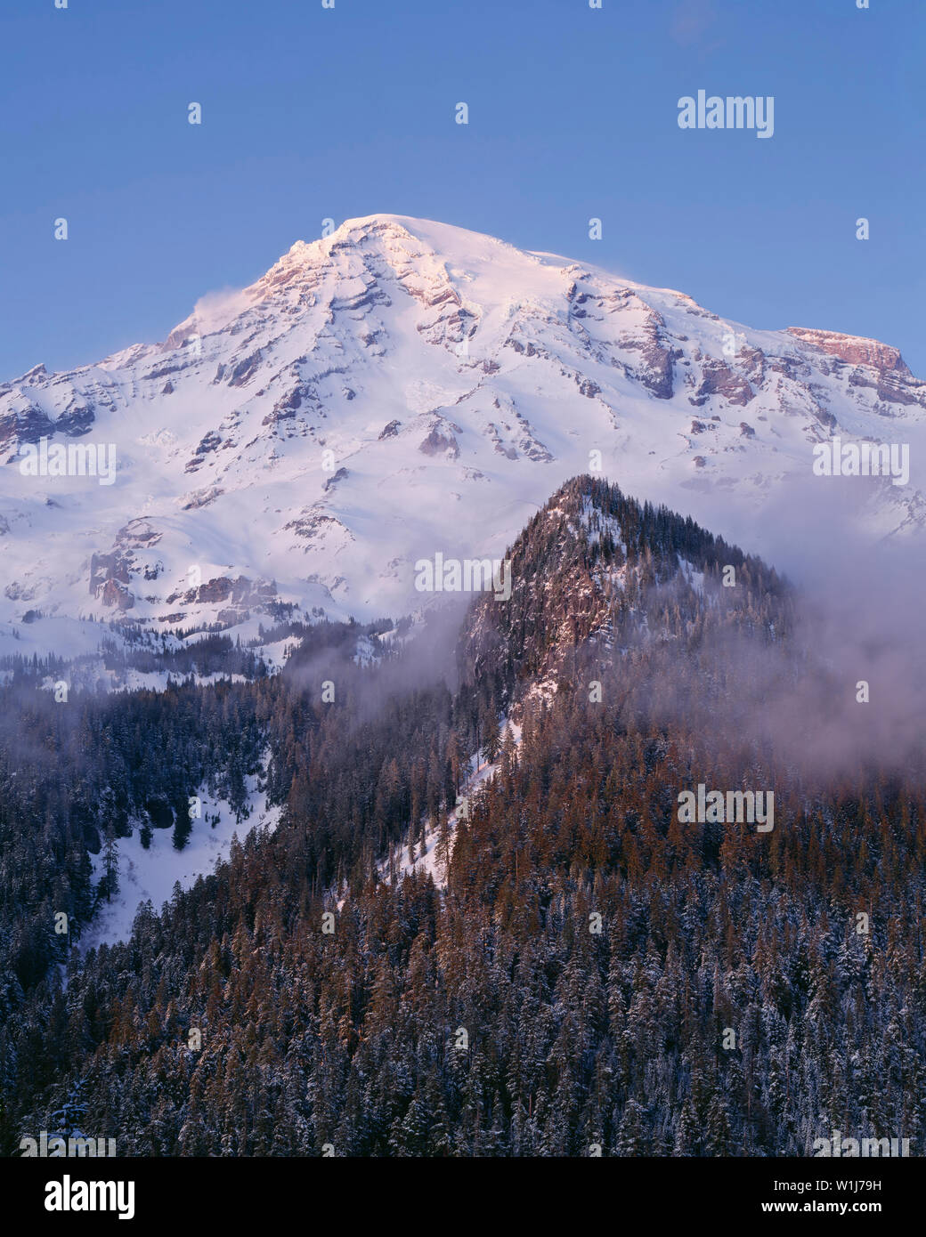 USA, Washington, Mt. Rainier National Park, Soft sunset light on snowy south side of Mt. Rainier in winter with swirling fog on the lower slopes. - Stock Image