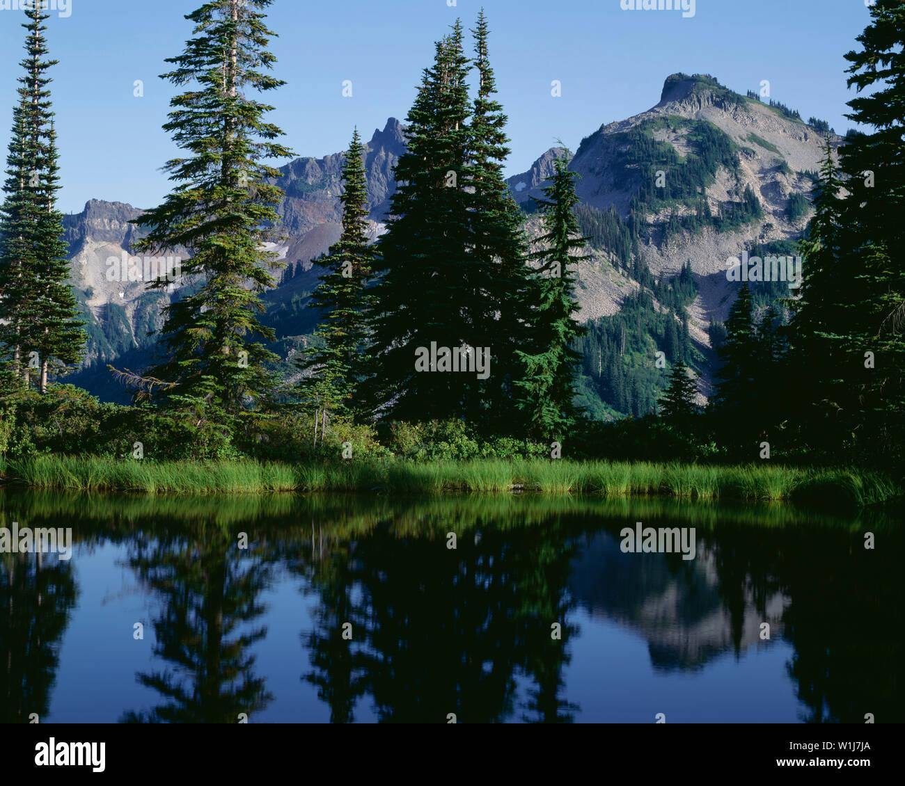 USA, Washington, Mt. Rainier National Park, Unicorn Peak and the Tatoosh Range are reflected in a small pond. - Stock Image