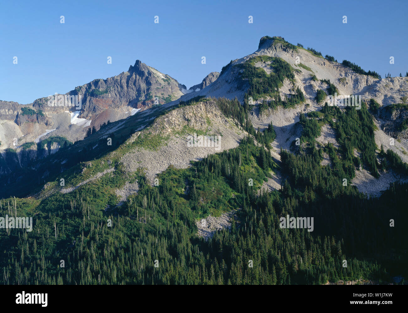 USA, Washington, Mt. Rainier National Park, Unicorn Peak and the Tatoosh Range rise above evergreen forest. - Stock Image