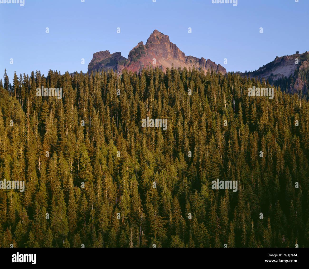 USA, Washington, Mt. Rainier National Park, Pinnacle Peak rises above surrounding evergreen forest. - Stock Image