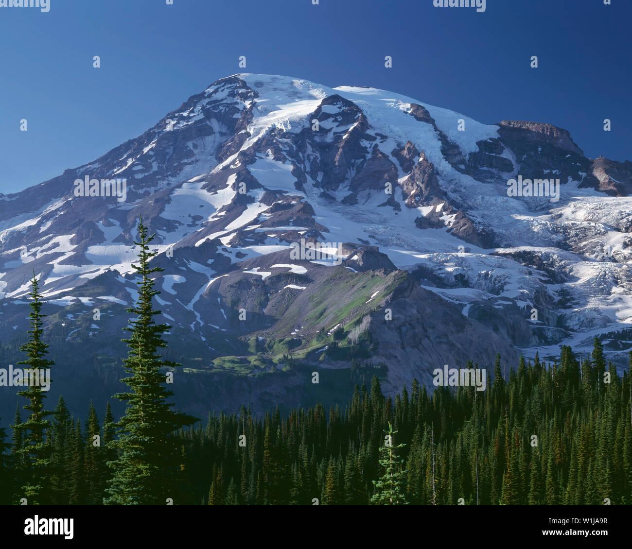 USA, Washington, Mt. Rainier National Park, South side of Mt. Rainier and evergreen forest, Paradise area. - Stock Image