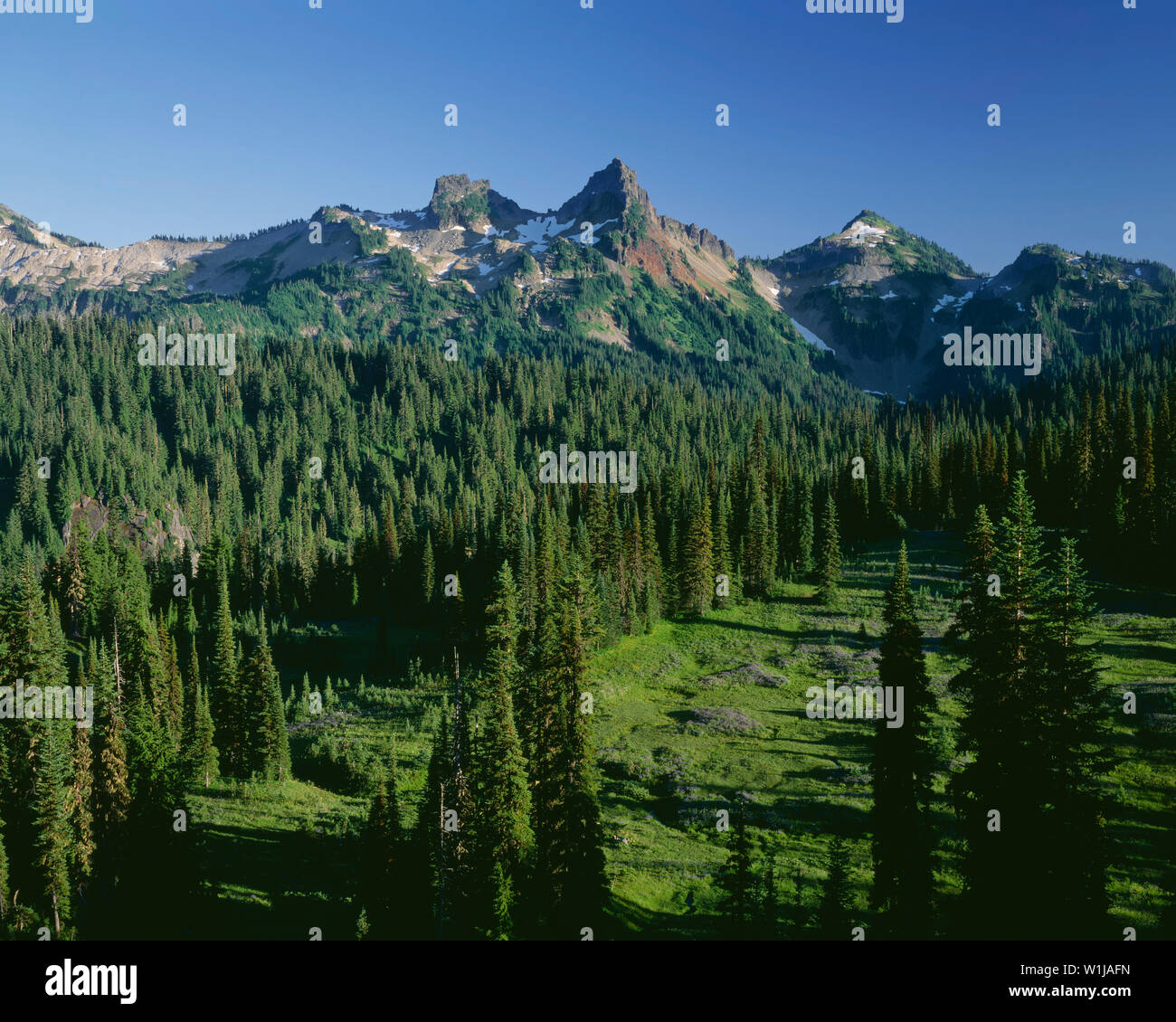 USA, Washington, Mt. Rainier National Park,  Peaks of the Tatoosh Range overlook lush meadows and coniferous forest below Paradise area. - Stock Image