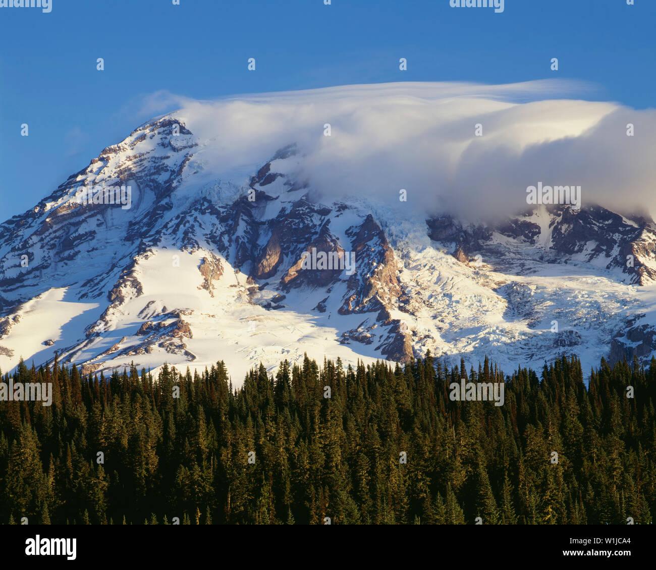 USA, Washington, Mt. Rainier National Park, Morning clouds shroud summit of Mt. Rainier above evergreen forest. - Stock Image